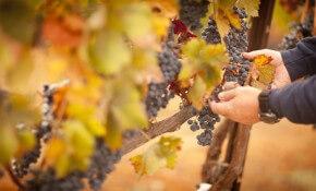 Wineries in Wisconsin Dells