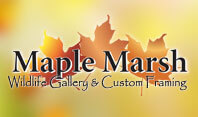 Maple Marsh Wildlife Prints & Gifts