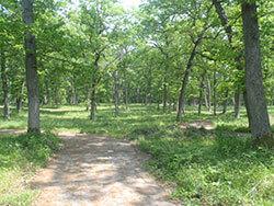 Timbavati Winding Path