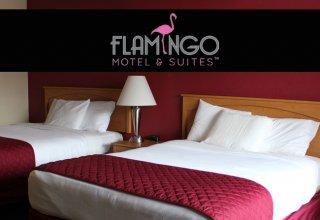 Flamingo-Blog