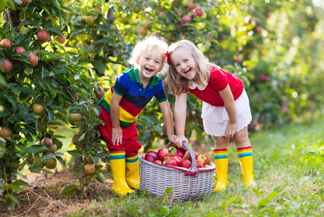 two young girls picking apples in an apple orchard